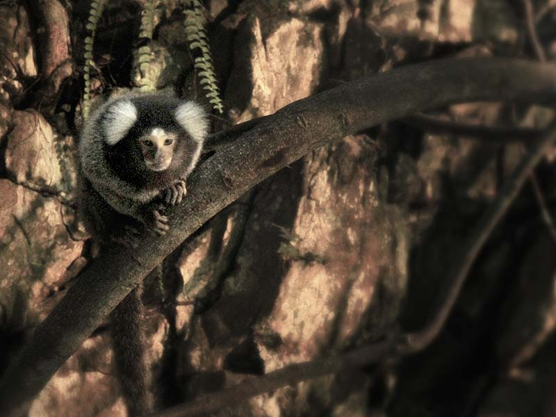 Marmoset Tree House - Lost World Petting Zoo