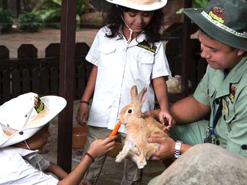 Rabbit Wonderland - Lost World Petting Zoo
