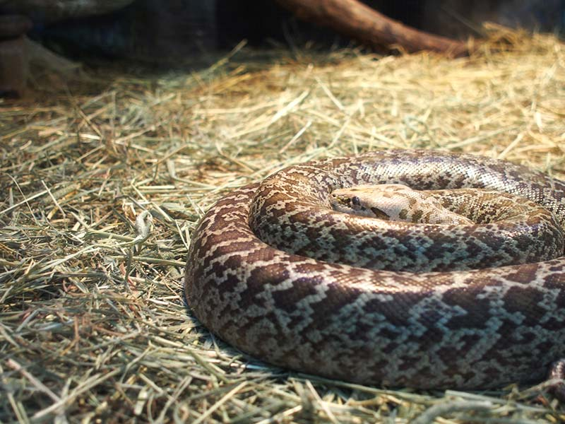 Serpentarium - Lost World Petting Zoo